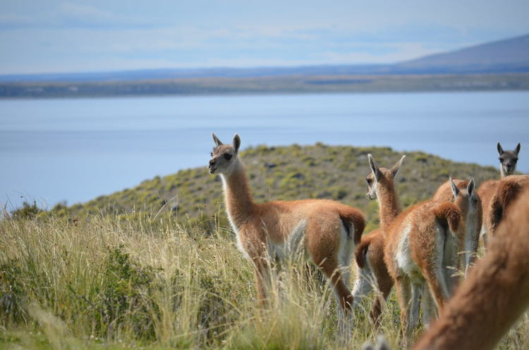 Viaje-a-La-Patagonia