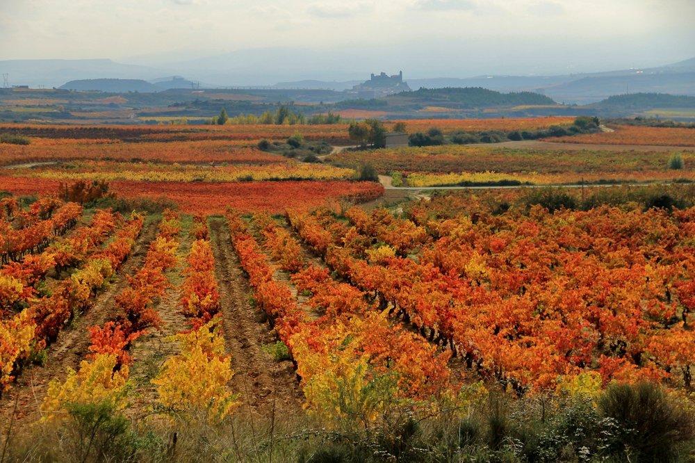 Azofra-la-Rioja