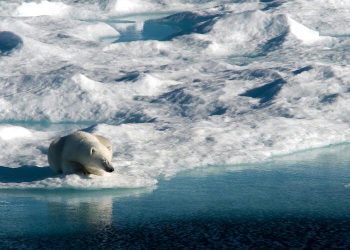 osos polares_Isla Baffin