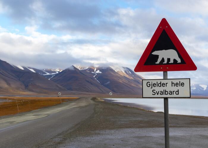 osos polares_Svalbard