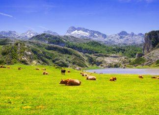 escapada-viaje-asturias-naturaleza