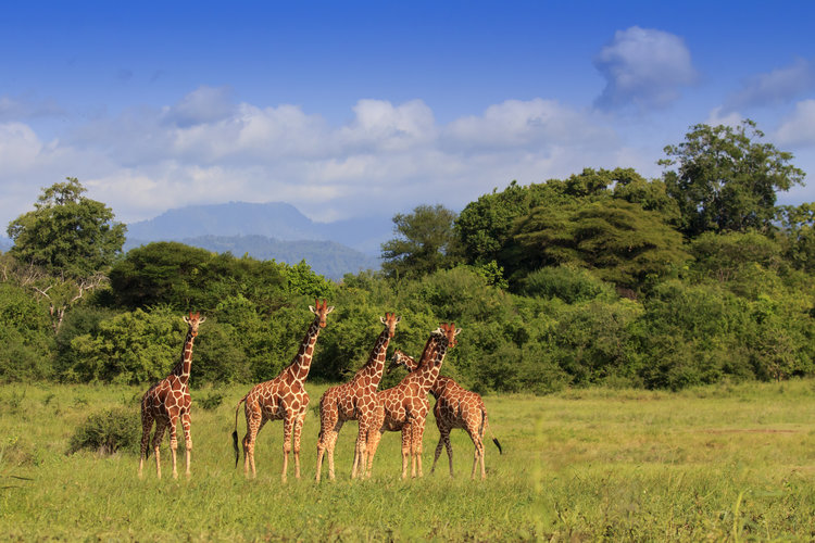 Amboselli_Kenia