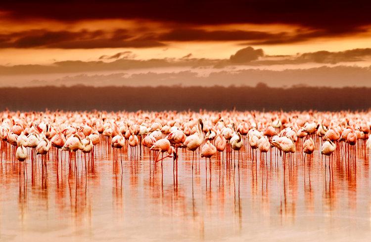 Lago_Nakuru_Kenia