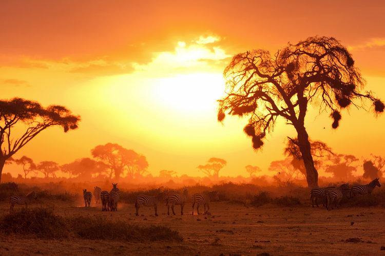 Masái_Mara_Kenia