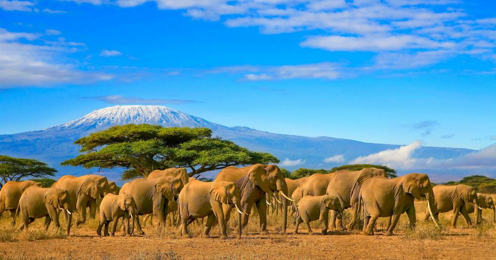 Vistas al Kilimanjaro en Kenia