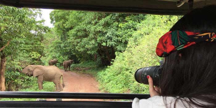 Elefantes en el safari en Tarangire, Tanzania