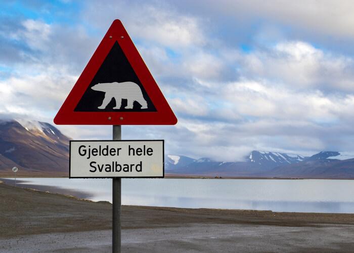 Viaje a Svalbard señal osos polares
