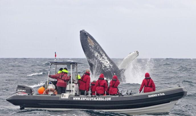 avistamiento de ballenas en las islas azores