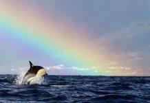 avistamiento de orcas en un viaje a Azores