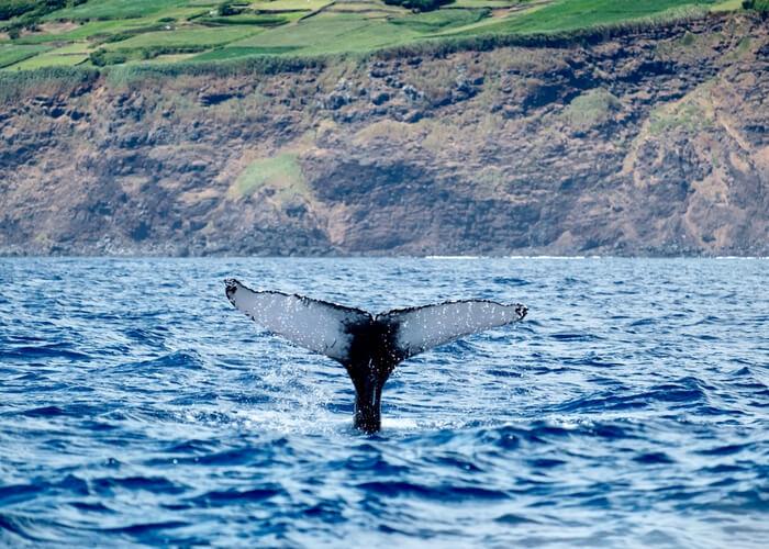 viaje-azores-ballena