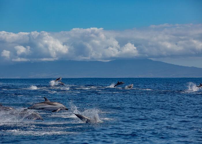 viaje-azores-cetaceos