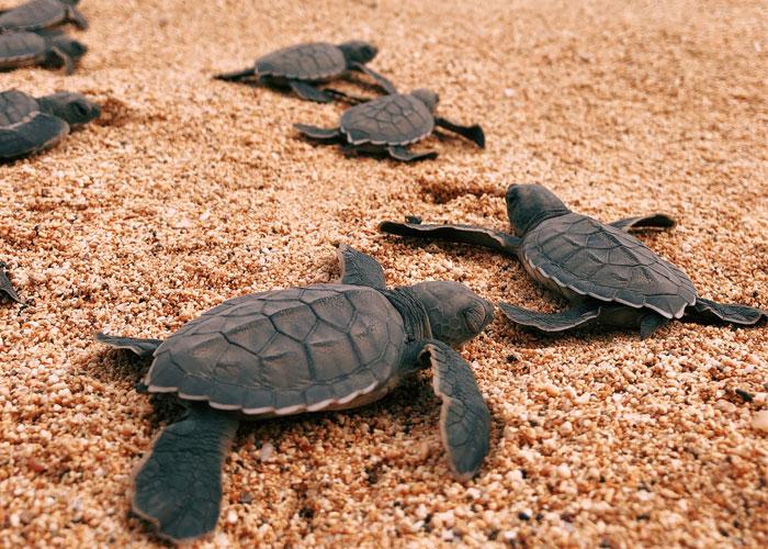 tortugas-turismo-santo-tome