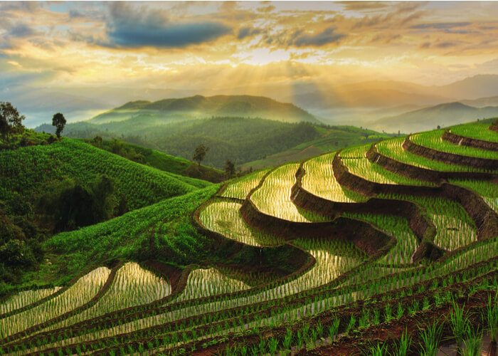 viaje-tailandia-arroz