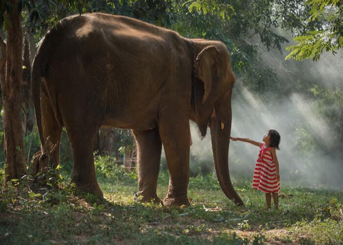 viaje-tailandia-elefante