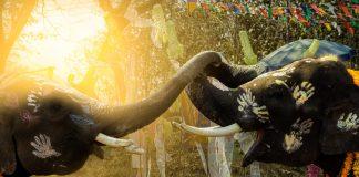viaje-tailandia-songkran-d
