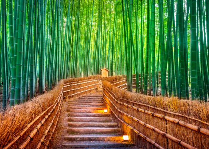 viaje-japon-kioto