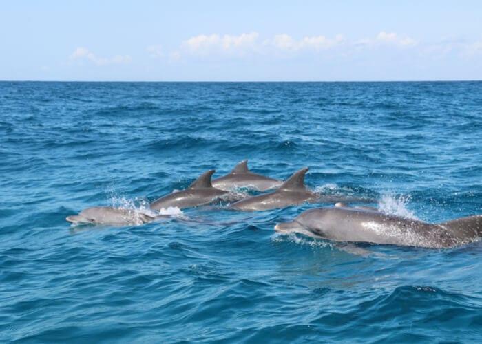 viaje-a-zanzibar-delfines
