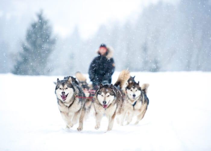viaje-aurora-boreal-suecia-huskies