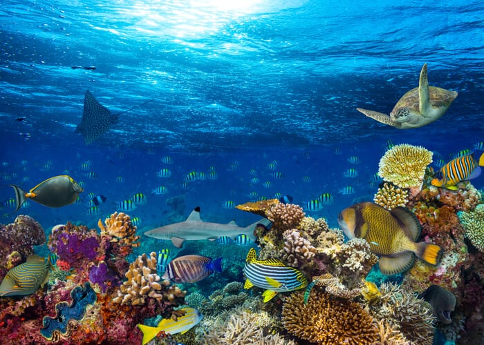 viaje-zanzibar-arrecife