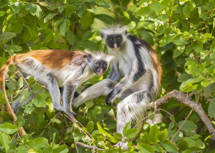 viaje-zanzibar-monos