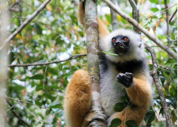 viajar-madagascar-monos