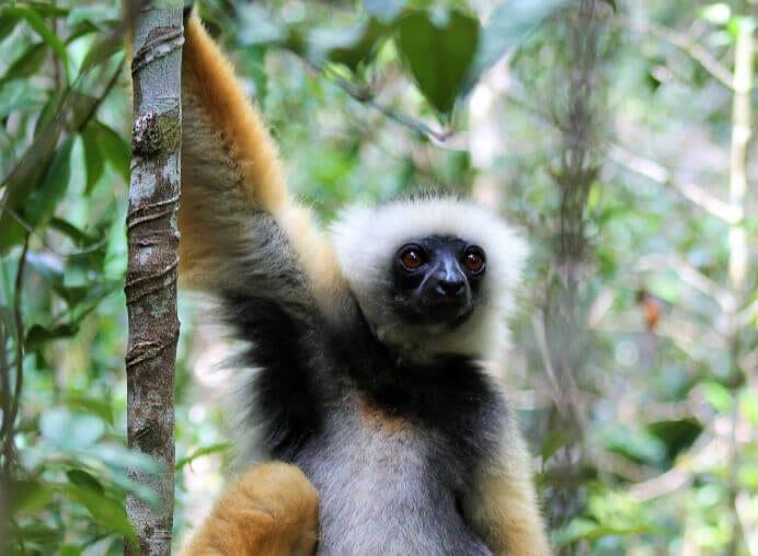viaje-andasibe-lemur
