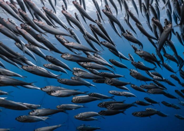 viaje-sudafrica-sardine-run