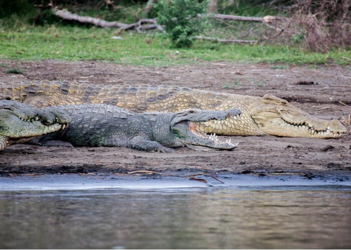 viaje-a-etiopia-biodiversidad-cocodrilos