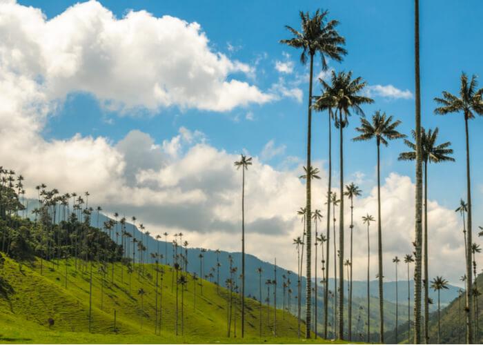 viaje-colombia-cocora