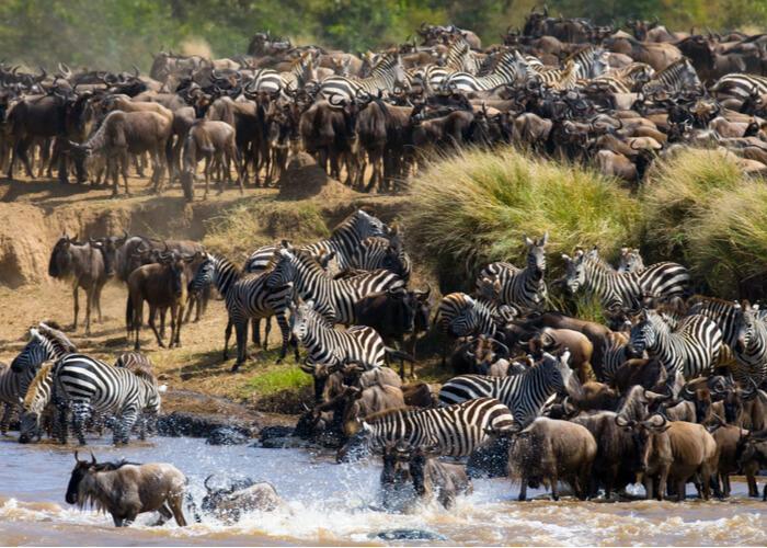 tanzania-noviembre-gran-migracion