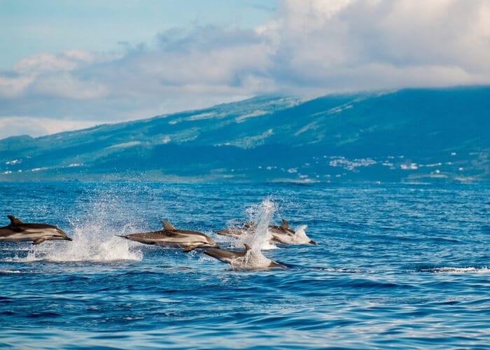 viaje-a-las-azores-terceira-avistamiento-delfines