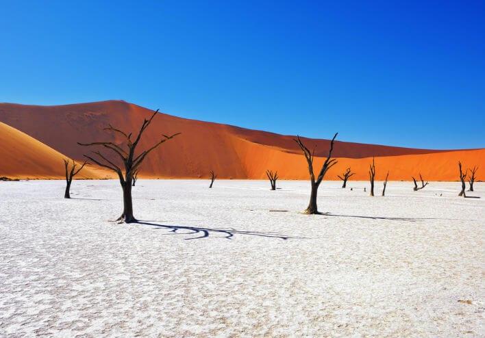 namibia-arboles-dunas