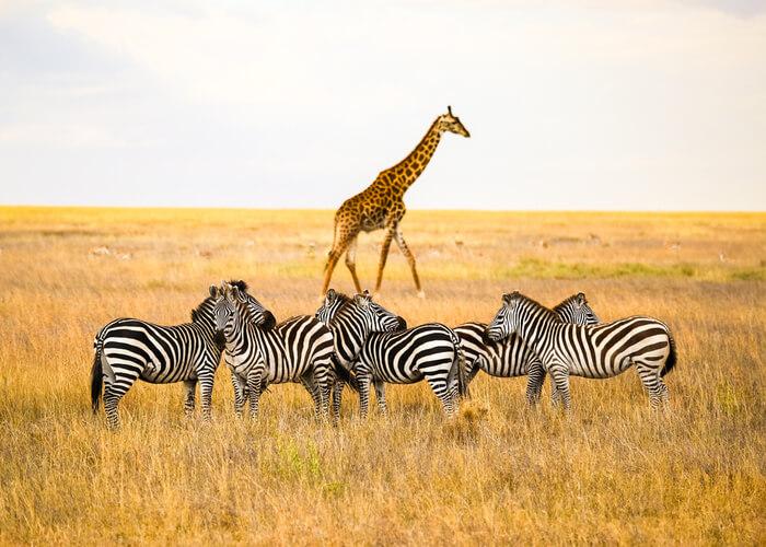viaje_tanzania
