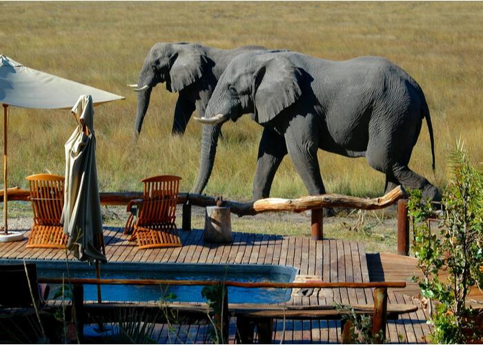 safari_botsuana_exclusividad