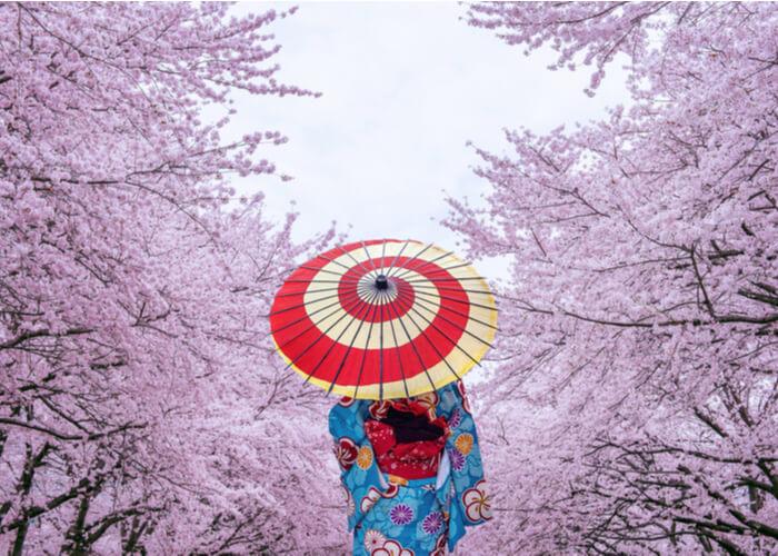 viaje romantico en Kyoto, Japón con los cerezos en flor