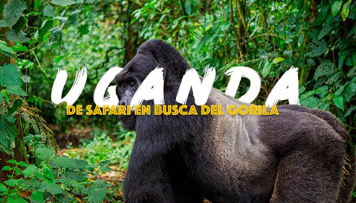 viaje-safari-uganda-gorilas