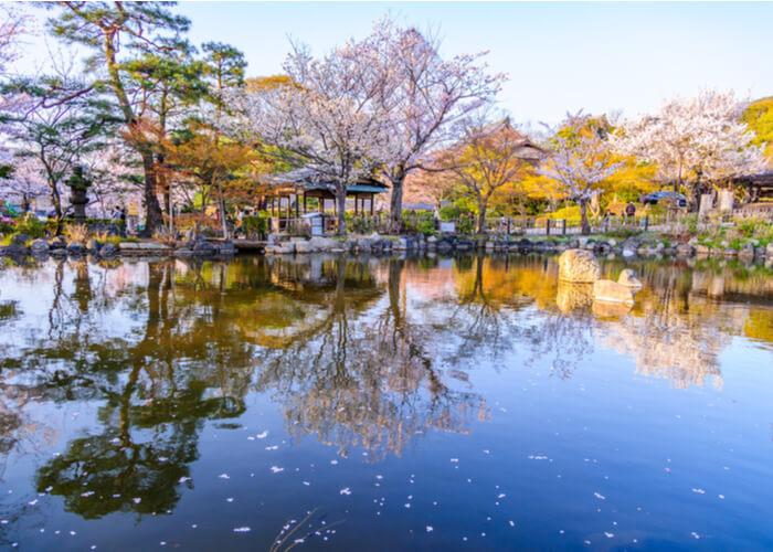 viaje_japon_floracion_cerezos_kioto