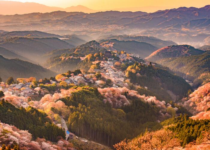 viaje_japon_floracion_cerezos_nara