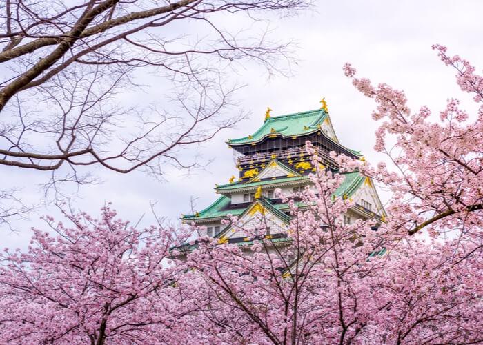 viaje_japon_floracion_cerezos_osaka