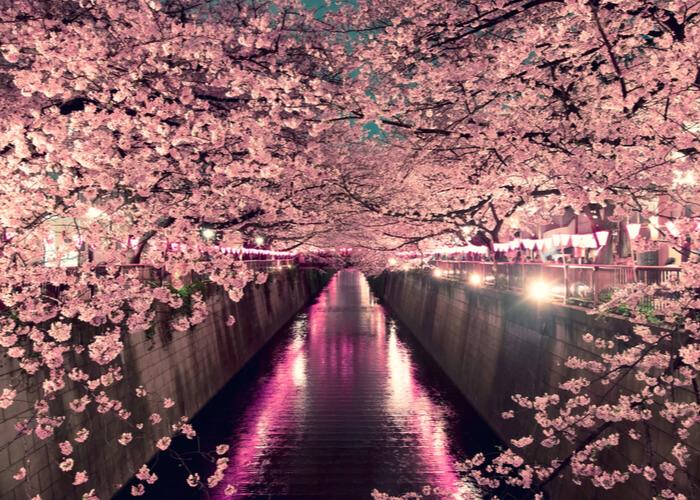 viaje_japon_floracion_cerezos_tokio