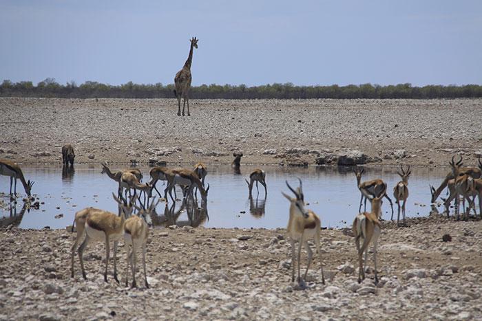 safari-etosha-lagunas