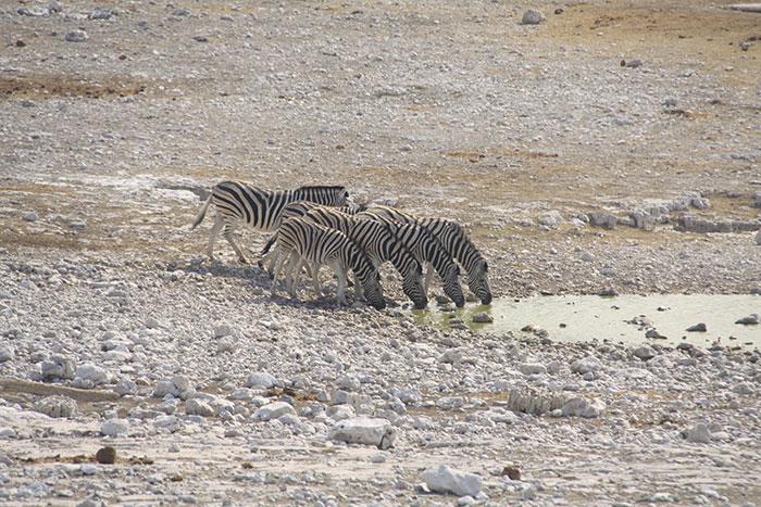 safari-etosha-namibia-viaje