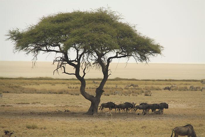 safari-etosha-namibia
