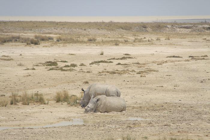safari-etosha-rinocerontes