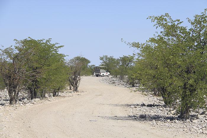 safari-privado-namibia