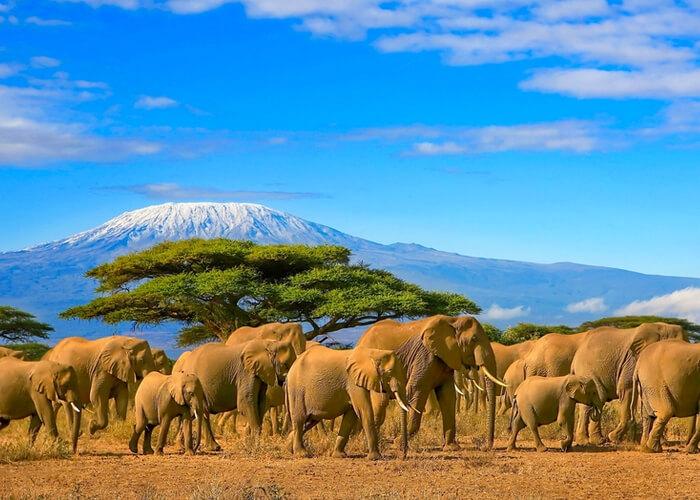 safari_kenia_elefantes