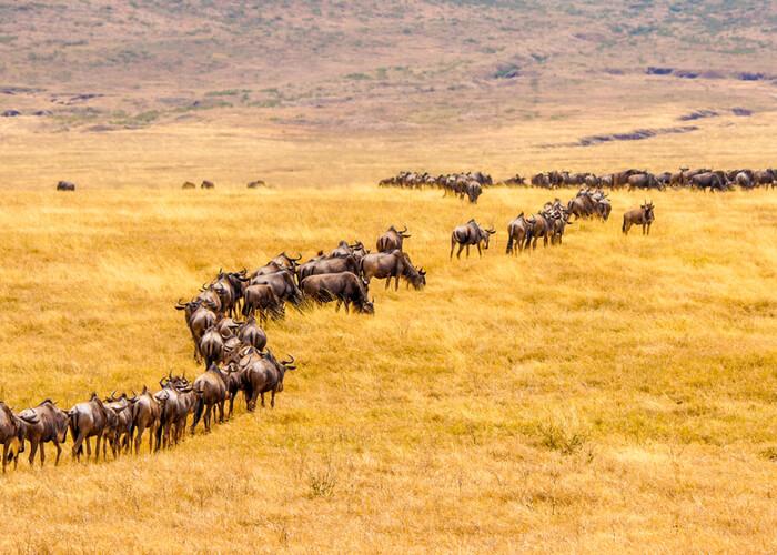 safari_kenia_gran_migracion