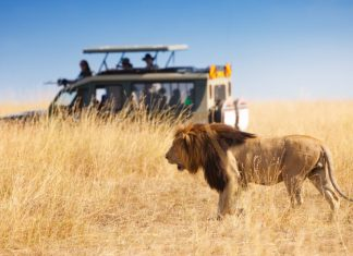 safari_kenia_jeep