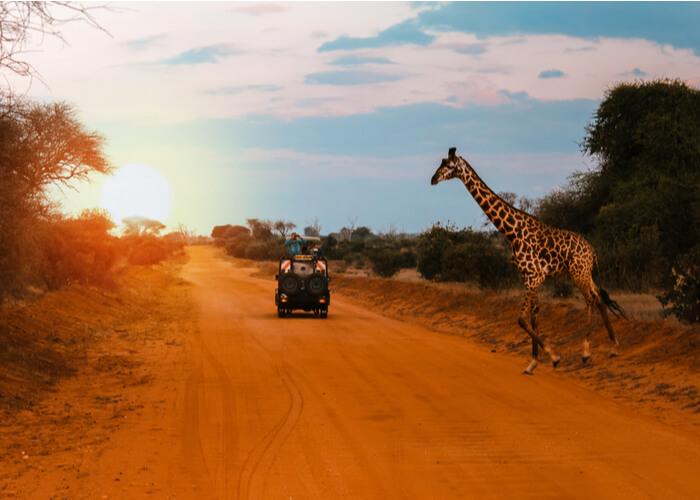 safari_kenia_jeep_jirafa