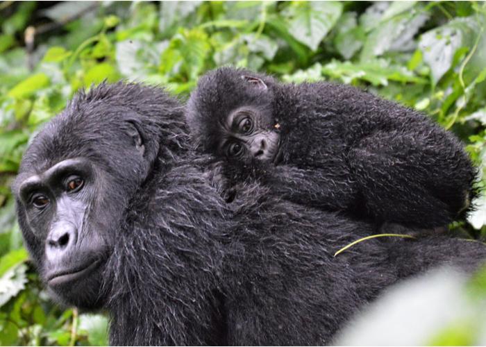 safari_uganda